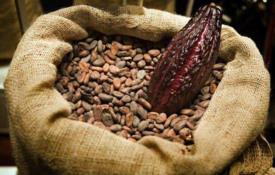 organski kakao