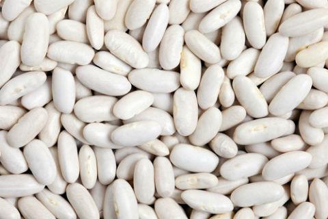 pasulj proteini